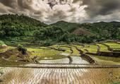 Rizière en Thailande