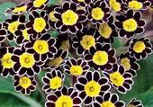 belles fleurs au coeur jaune