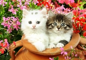 2 adorables chatons