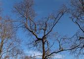 arbre dépouillé