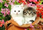 Jolis chatons