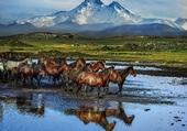 chevaux turcs