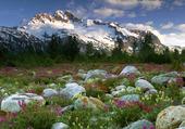 Rochers et fleurs