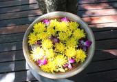 Puzzle présentation florale