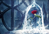 Puzzle Rose éternelle