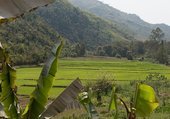 Rizières - Laos