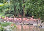 Flaments roses sous la pluie
