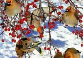 Puzzle Oiseaux en hivers