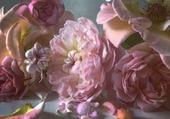 roses en fin de vie