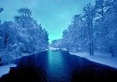 La neige surcharge les arbres en hiver.