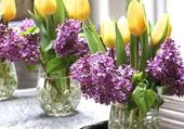 Tulipes et lilas........joli