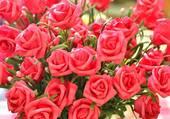 Joli bouquet de roses