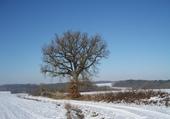 Puzzle Chêne dans paysage de neige
