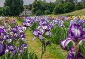 Les iris - Jardins Merian à Münchenstein
