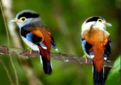 oiseaux aux 1000 couleurs