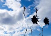 Puzzle le chant des oiseaux