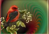 oiseau et coccinelle rouge