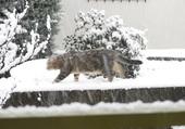 ha cha neige  alors !!!