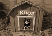 Lola Killer dans sa niche