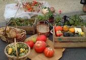 Au marché d'automne