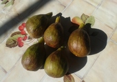 mes figues