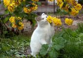 Petit chat attendrissant