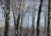 forêt du champs du feu