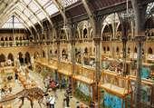 Muséum d'histoire naturelle à Oxford