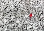 Puzzle Cardinal rouge
