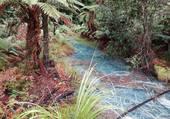 riviere new zeland