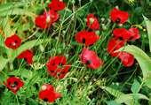 Bodnant Garden, Pays de Galles