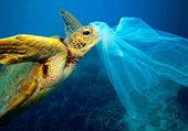 Puzzle Pollution de la mer