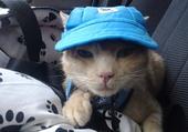 chat casquette