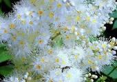 fleur plumeau