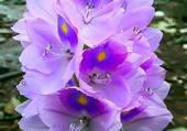 belles fleurs mauves
