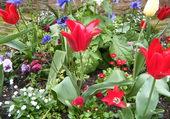 Belles fleur