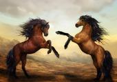 chevaux sauvages - art numérique