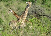 Parc Kruger Afrique du Sud