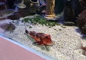 l'aquarium du Croisic