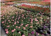 Puzzle serre de fleurs