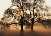 racines bronzé