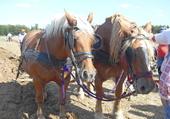 Une deux chevaux!!!