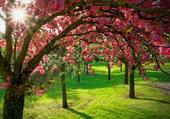 Arbres de printemps en fleurs