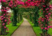 Belles arcades de roses