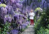 jardin glycine