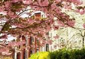 Arbre du printemps en fleurs