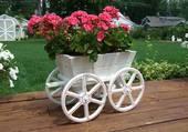 Chariot de géranium