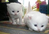 enki et son frère