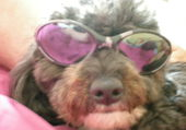 mon chien en vacances