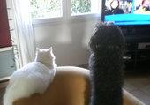 chien et chat devant la télé